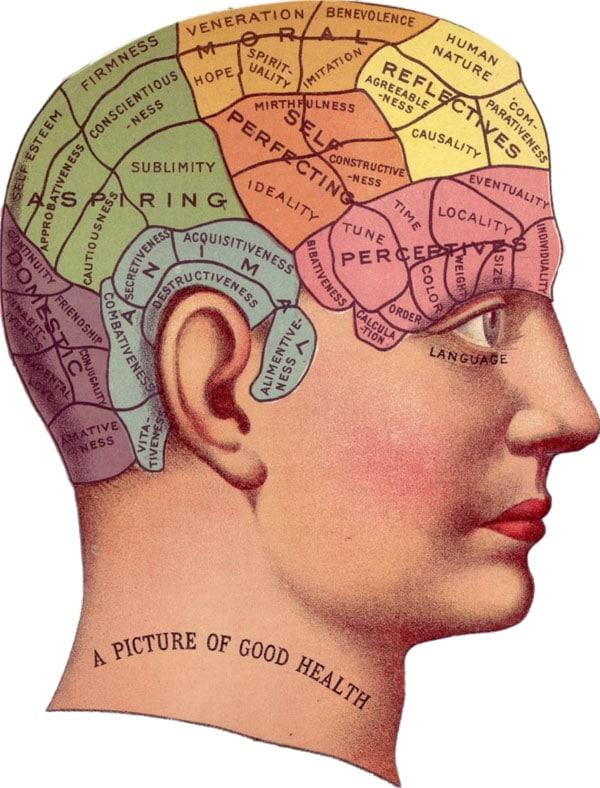 vintage brain study - learning psychology skills